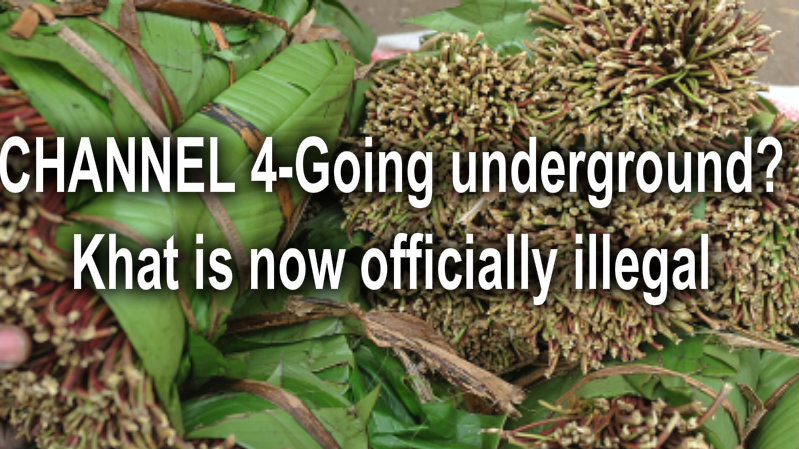 CHANNEL4-Going underground? Khat is now officially illegal